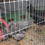 Expoziție de animale mici la Carei (Foto)