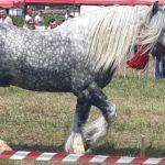 A devenit tradiție. Concurs de cai la Ruseni (Foto)