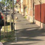 Câinele lup este din nou pe strada. S-a depus plângere la Poliție (Foto)