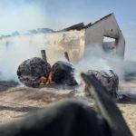 Incendiu la o ferma. 150 de miei s-au prapadit în flăcări  (Foto)