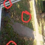 Invazie de plosnite în Satu Mare (Foto)