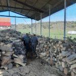 E sezon de vanatoare … la lemnele de foc (Foto)
