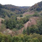 Pădurile din Maramures, luate la control