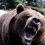 S-au speriat de un pui de urs ! Cumatrul a venit în sat la ospat