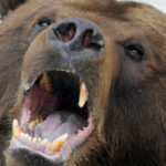 Urs pe o strada din Targu Mures