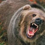 Ursul l-a atacat chiar in propria curte. Barbatul in stare grava