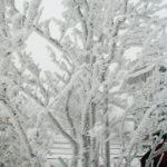 Cod galben de ceata si chiciura in mai multe judete din Transilvania