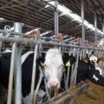 APIA eliberează adeverințe pentru beneficiarii Măsurii 14 – Bunăstarea animalelor