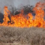 Incendiu de vegetație uscata lângă cimitir