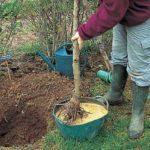 Mii de copaci tineri vor fi plantați anul acesta în oraș