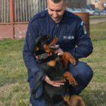 """Cele mai îndrăgite """"jandarmerițe"""" ale IJJ Arad"""