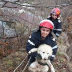 Câine salvat de pompieri. A rămas captiv pe stânca (Foto)