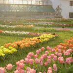 Feerie de culori la Grădina Botanica din Cluj-Napoca