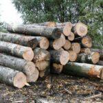 Amenzi sau închisoare pentru furtul de lemne