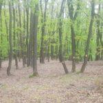 Controale în pădurile Romaniei