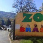 Se redeschide grădina zoologică. Vezi când
