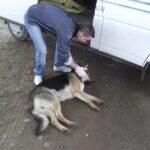 Poliția Animalelor si-a început activitatea și la Satu Mare