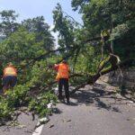 Un copac prăbușit a blocat tot drumul (Foto)