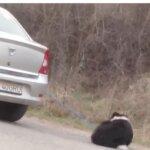 Câine legat și tras după masina