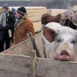 Arad: Targurile de animale rămân inchise