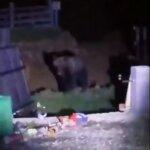 Ursul a atacat la Colibita